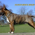 Josh (Sanco Rock Solid)